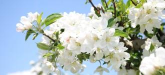 """Frühling in Schenna - Urlaub mit der Vorteilskarte """"Schenna Frühling Card"""""""