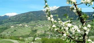 Hotel Fürstenhof - Frühlingsurlaub in Südtirol