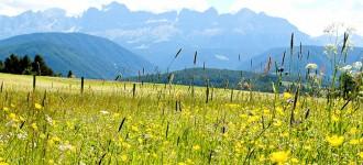 Wandern in den Dolomiten mit grandiosem Bergpanorama