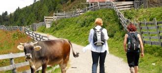 Wanderurlaub in Schenna