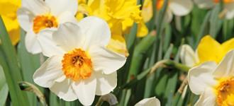 Wanderungen im Frühling durch Schenna bei Meran